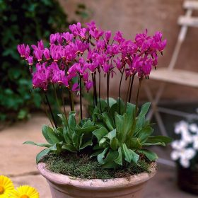 Bálványvirágok